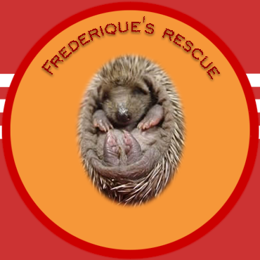 Click on the hedgehog to read the full story of the rescue efforts on 4 little and very cute hedgehogs.